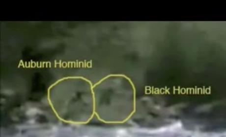 "Bigfoot in Oregon? New Sasquatch ""Sightings,"" Rumors Emerge"