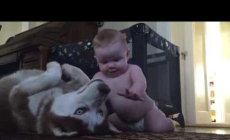 Baby Plays with Husky, Internet Collectively Cheers