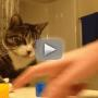 Cat Solves Magic Trick, Doesn't Seem to Care