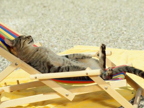 Sun Kitten