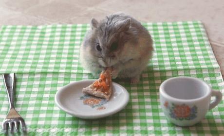 Tiny Hamster Eats Tiny Pizza, Burrito; Melts the Internet Into Mush