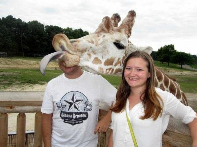 Giraffe Photobomb