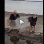 Police Dog Joins Handler for 22 Push-Ups: Find Out Why!