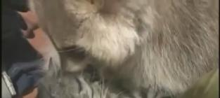 Raccoon Kisses, Loves on Cat in Adorable Video That Makes Us Smile