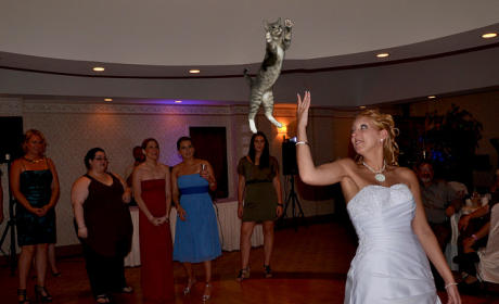 Bride Throwing Cat: Meme 3