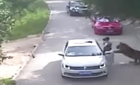 VIDEO: Tiger Mauls Woman to Death in China