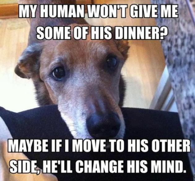 Incessant Begging