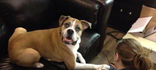 Dog Bucket List Photos: Saying Goodbye