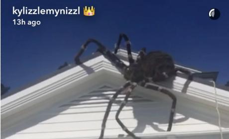 A Spider At Kylie Jenner's Home!