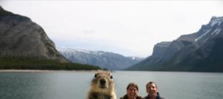21 Amazing Animal Photobombs