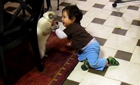 Cats Fight Kids, Parents Grab Their Phones Instead of Breaking it Up