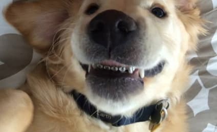 Dog Gets Braces For Overbite, Chases His Tail in Celebration