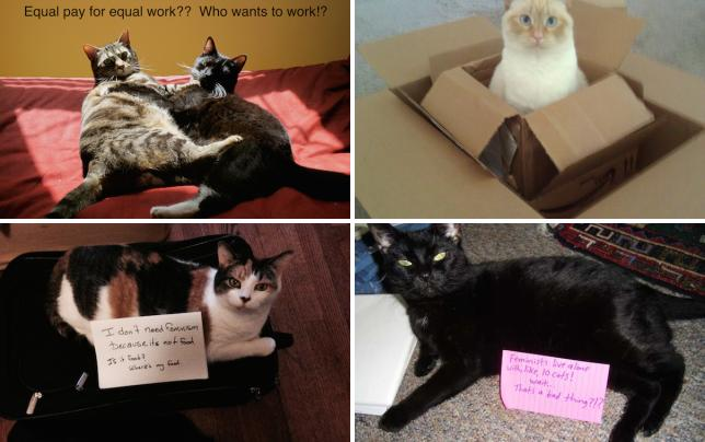 Confused cats against feminism hear them roar dont work it girl