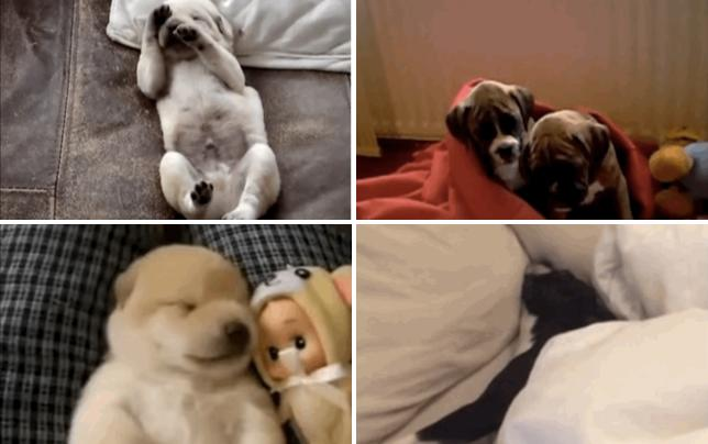 17 dogs with a major case of the mondays just 5 more hours
