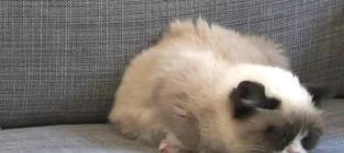 Harlem Shake: Grumpy Cat Style!