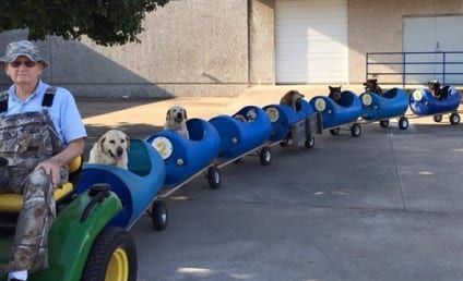 Man Rides Rescue Pets Around in Custom-Built Dog Train