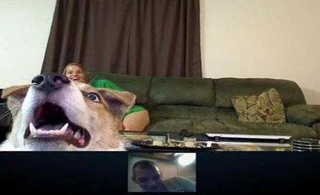 Dog on Skype