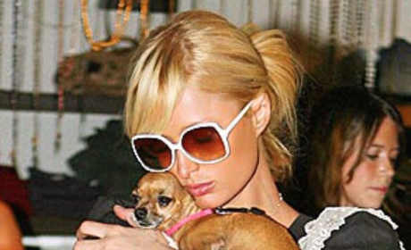 Paris Hilton Mourns Death of Beloved Dog