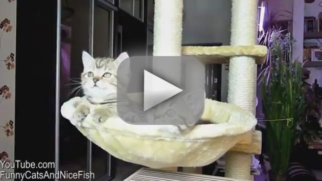 Cats Watch Tennis