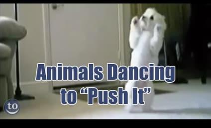 Animals Dance to Salt-n-Pepa: Get Down, Gorilla!