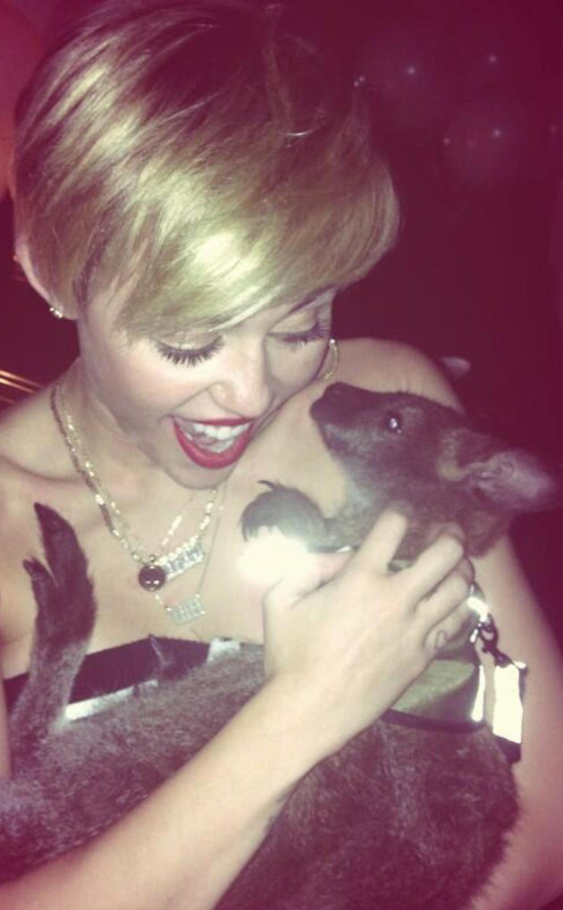 Miley Cyrus and a Marsupial