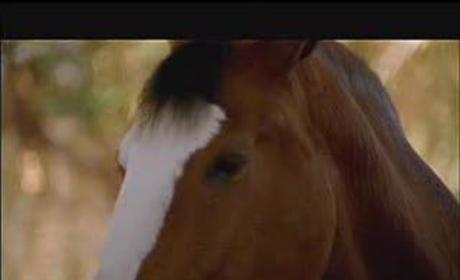 Super Bowl Commercial: Budweiser