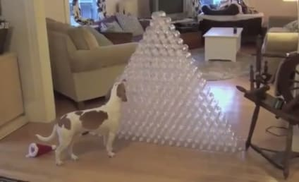 Dog Receives 210 Water Bottles for Christmas, Goes Totally Nuts