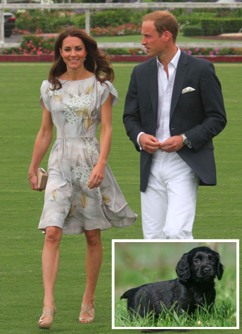Prince William, Kate Middleton, Puppy