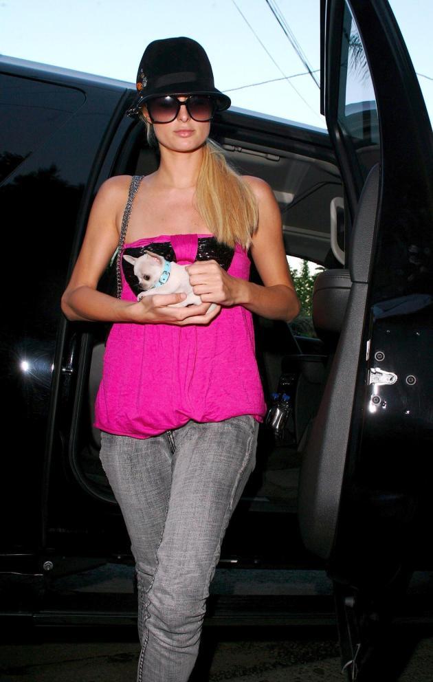 Paris Hilton Shopping Dog