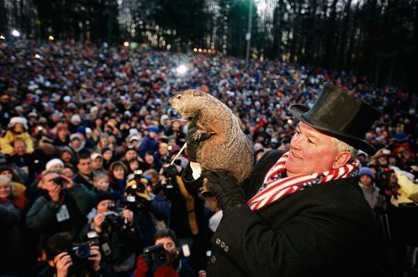 Punxsutawney Phil Photo