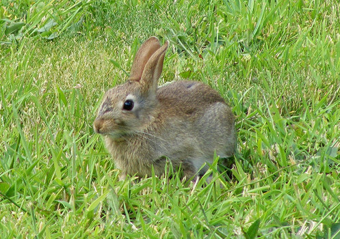 Man Killed Moving A Rabbit In Wyoming The Hollywood Gossip