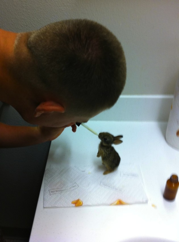 Marine and Rabbit