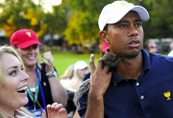 Lindsey Vonn, Squirrel, Tiger Woods