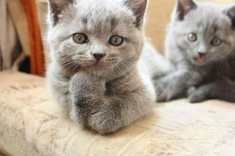 thinking-cat-thinks.jpg