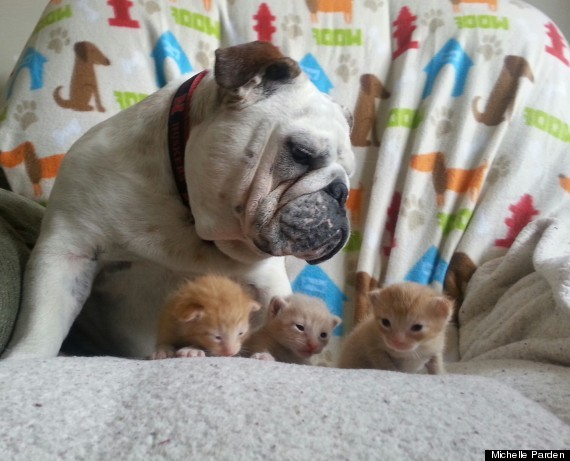 An Unexpected Family