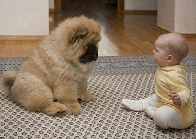 Dog vs. Child!