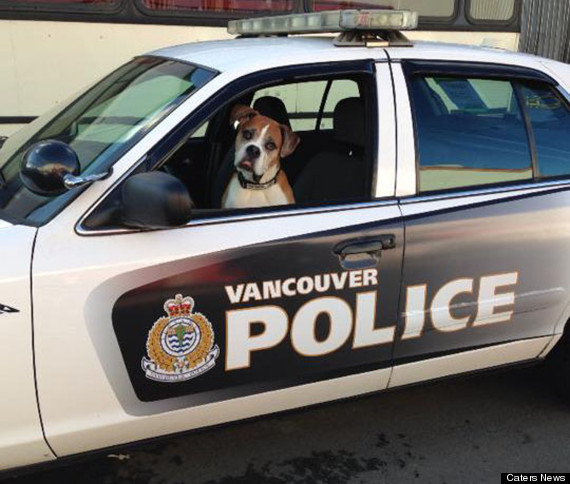 The Canine Unit