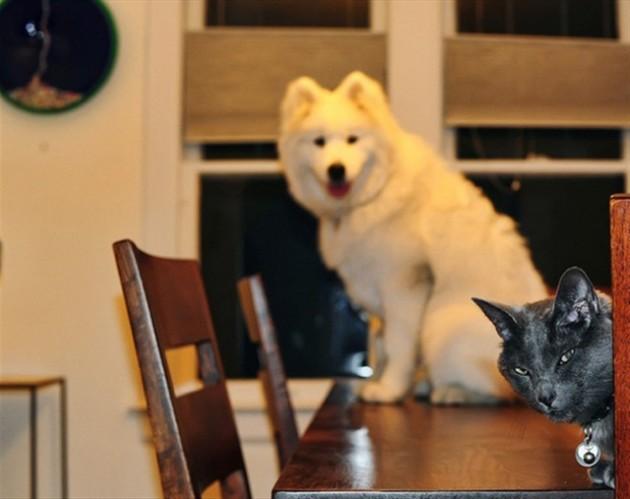 Angry Cat Photobomb