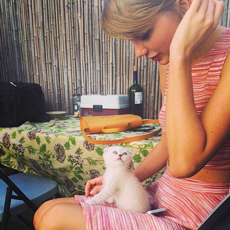 Taylor Swift, Cat