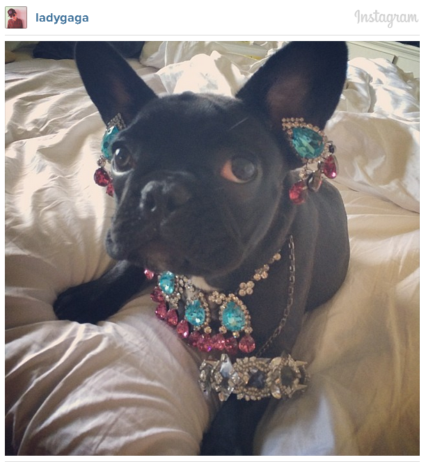 Lady Gaga's Dog