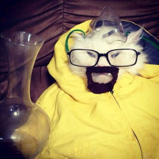 Cat Dressed Like Walter White