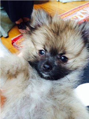 Miley Cyrus, New Dog Pic
