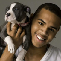 Chris brown dog