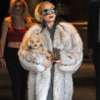 Lady gaga fur
