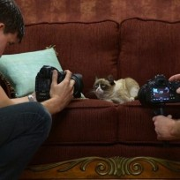 Grumpy Cat Photo Shoot