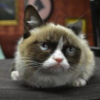 Grumpy Cat Picture