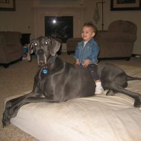 World's Largest Dog
