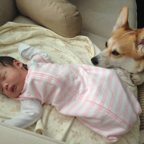 Dog Watches Baby Sleep