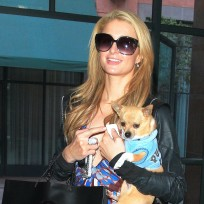 Paris-hilton-and-her-dog