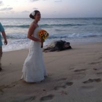 Sea Turtle Crashes Wedding